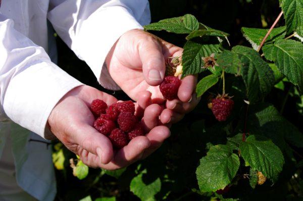 Barr Estate Alberta cottage winery raspberry