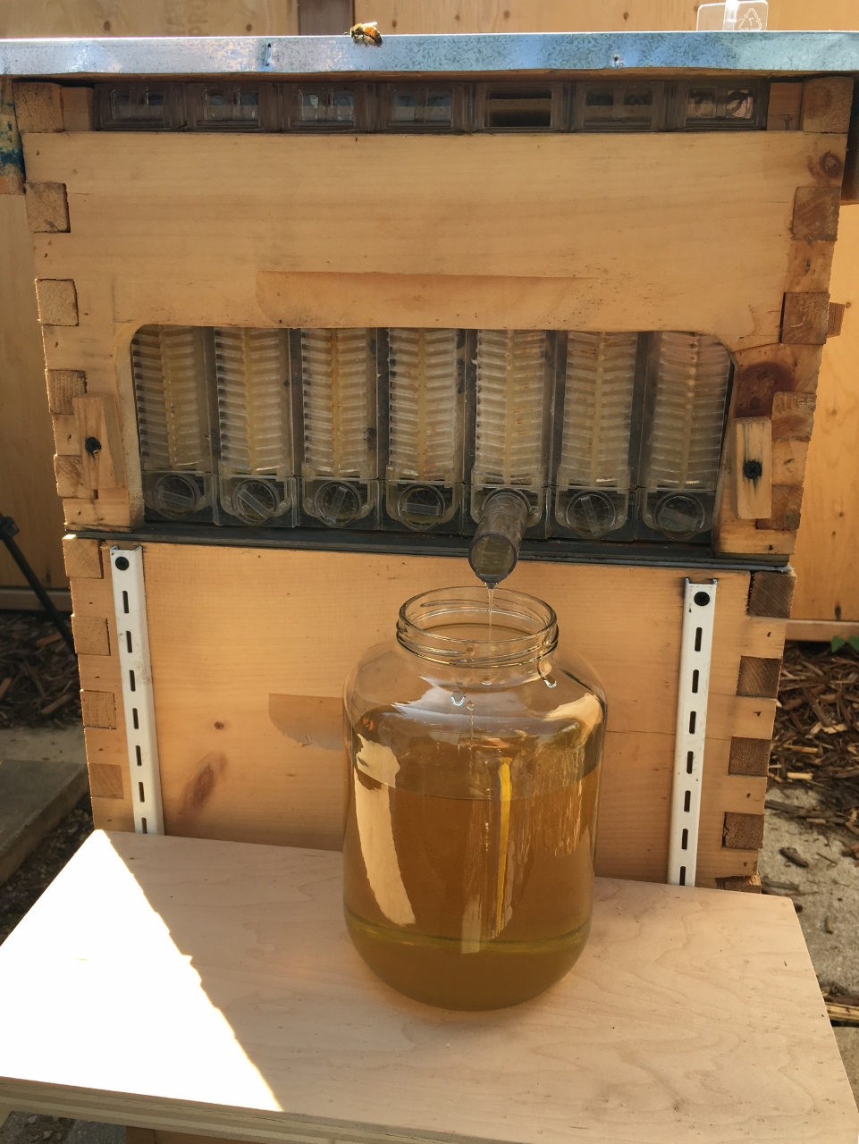 What does honey from a Flow Hive taste like?